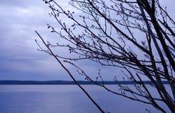 Ramificaciones de árbol contra el cielo azul Fotos de archivo