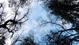 Ramificaciones de árbol contra el cielo azul Fotos de archivo libres de regalías