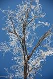 Ramificaciones de árbol cubiertas con escarcha Fotos de archivo