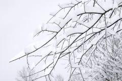 Ramificaciones de árbol cubiertas en nieve Imagen de archivo libre de regalías