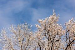 Ramificaciones de árbol del invierno Fotografía de archivo