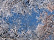 Ramificaciones de árbol del invierno imágenes de archivo libres de regalías