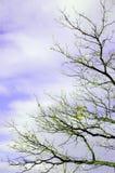 Ramificaciones de árbol del otoño Fotografía de archivo libre de regalías