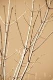 Ramificaciones de árbol descubiertas Fotografía de archivo libre de regalías