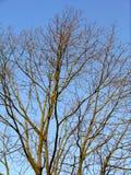 Ramificaciones de árbol descubiertas Foto de archivo libre de regalías