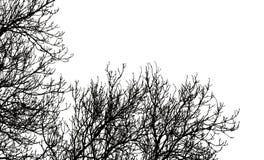 Ramificaciones de árbol en blanco Imágenes de archivo libres de regalías