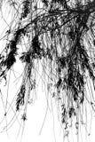 Ramificaciones de árbol lánguidas imagen de archivo