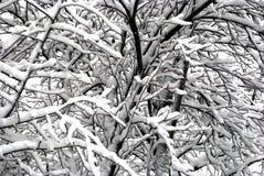 Ramificaciones de árbol nevadas foto de archivo libre de regalías