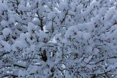 Ramificaciones de árbol nevadas Fotografía de archivo libre de regalías