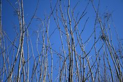 Ramificaciones de árbol que alcanzan para el cielo azul fotografía de archivo