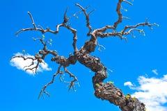 Ramificaciones de árbol secas Imágenes de archivo libres de regalías