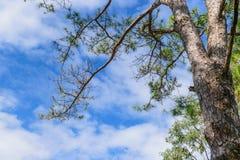 Ramificaciones de árboles Fotografía de archivo libre de regalías