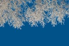 Ramificaciones de árboles en escarcha Imagenes de archivo