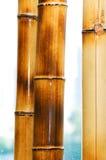 Ramificaciones de bambú aisladas en el blanco Imágenes de archivo libres de regalías