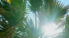 Ramificaciones de la palma en el sol Palmeras de la cámara lenta con el sol almacen de metraje de vídeo