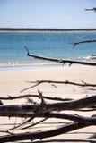 Ramificaciones de la playa de Inskip Imágenes de archivo libres de regalías