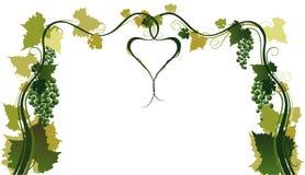Ramificaciones de las uvas Imagen de archivo libre de regalías