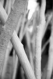 Ramificaciones de madera foto de archivo libre de regalías