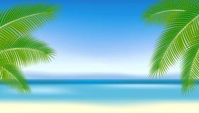 Ramificaciones de palmeras contra el mar azul. Imagen de archivo