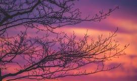 Ramificaciones de árbol con las hojas con nublado Foto de archivo