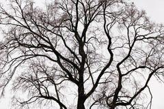 Ramificaciones de un árbol Fotografía de archivo libre de regalías