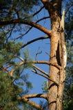 Ramificaciones de un árbol Imagenes de archivo