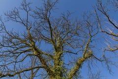Ramificaciones de un árbol Fotos de archivo libres de regalías