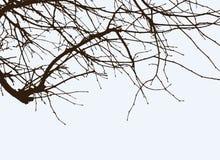 Ramificaciones del árbol Fotografía de archivo