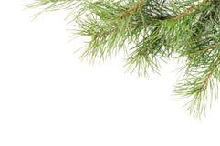 Ramificaciones del árbol de navidad Imagen de archivo libre de regalías