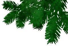 Ramificaciones del árbol de navidad Foto de archivo libre de regalías