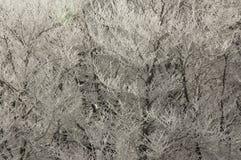 Ramificaciones del hielo Fotos de archivo libres de regalías