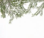 Ramificaciones del pino Imágenes de archivo libres de regalías