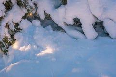Ramificaciones del pino bajo la nieve Fotos de archivo