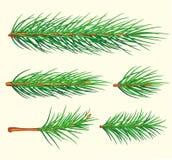 Ramificaciones del pino. Cepillo del vector Fotografía de archivo libre de regalías