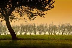 Ramificaciones del solo árbol Imagen de archivo libre de regalías
