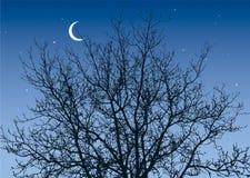 Ramificaciones en el cielo nocturno Fotos de archivo libres de regalías