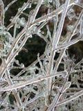 Ramificaciones en hielo foto de archivo