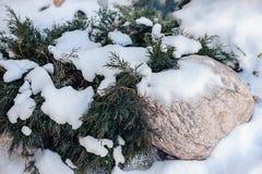 Ramificaciones en la nieve Foto de archivo