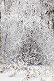 Ramificaciones en la nieve Fotos de archivo libres de regalías