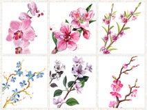 Ramificaciones florecientes Foto de archivo libre de regalías