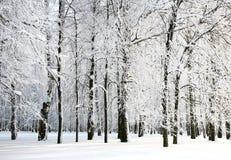 Ramificaciones hermosas de la nieve del invierno ruso Fotos de archivo