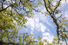 Ramificaciones, hojas y cielo Foto de archivo libre de regalías
