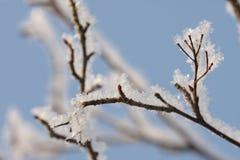 Ramificaciones Ice-covered Imagenes de archivo