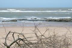 Ramificaciones muertas en la playa Fotografía de archivo libre de regalías