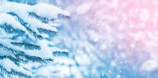 Ramificaciones nevadas del abeto Imagen de archivo