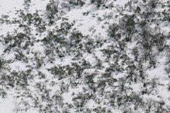 Ramificaciones nevadas foto de archivo libre de regalías