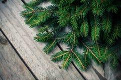 Ramificaciones Spruce verdes Fotografía de archivo libre de regalías
