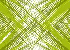 Ramificaciones verdes Imagen de archivo