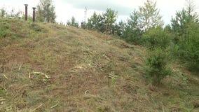Ramificaciones verdes del pino Ramas verdes del árbol o del pino de abeto Hierba seca en una pequeña colina Las pequeñas chimenea almacen de video