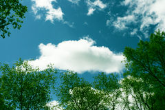Ramificaciones y cielo Imagen de archivo libre de regalías
